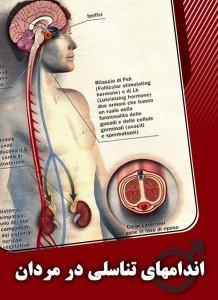 اندامهای تناسلی در مردان